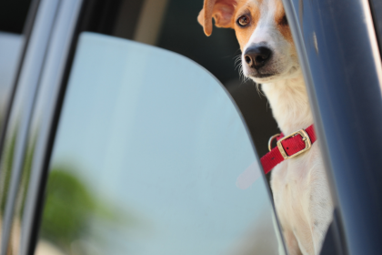 Making Sure You Are Prepared When Picking Up Your New Dog
