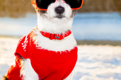 Help Your Dog Avoid Winter Blues With These Safety Measures