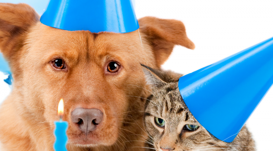 Try These Fun And Quirky Ways To Celebrate Your Pet's Birthday